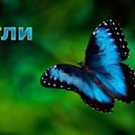 Прогнозирующий индикатор «Бабочки Гартли»