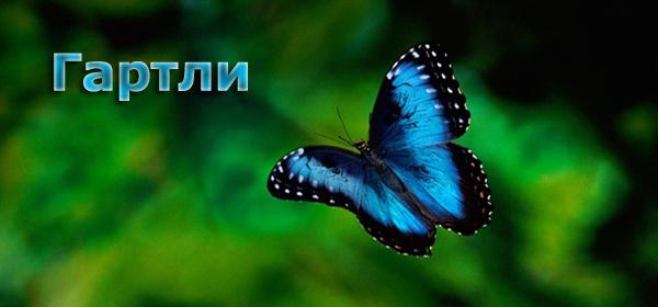 "Прогнозирующий индикатор ""Бабочки Гартли"""
